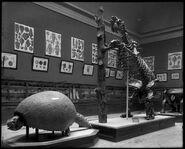 Hall 35 Field Museum 1900