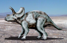 Ojoceratops NT.jpg