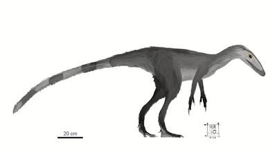 Sinocalliopteryx.png