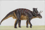 Chasmosaurus022