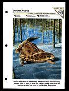 Wildlife fact file Diplocaulus front