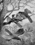 Archeopteryx Heinrich Harder 1906