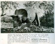 Jonas Studios 1964 World's Fair Triceratops