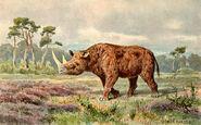 Woolly rhino nashorn