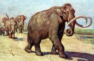 Columbian mammoth TFA