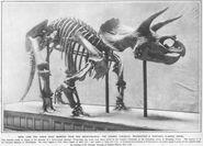 Large illustratedlondonnews triceratops