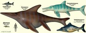 IchthyosaurModels.jpg