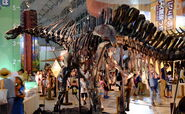 Amargasaurus behind