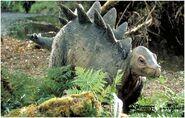 Stegosaurus baby