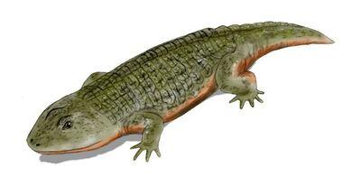 Peltobatrachus.jpg