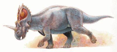 Eucentrosaurus.jpg