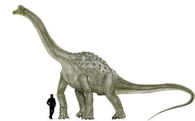 Pelorosaurus.jpg