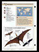 Wildlife fact file Pteranodon back