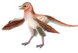 Eosinopteryx.jpg