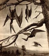 Pterodactyls by zdenek burian