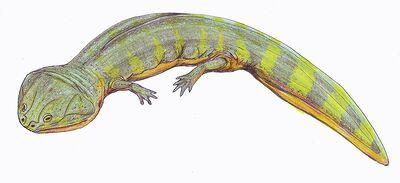 Batrachosuchus.jpg