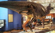 Lambeosaurus skeleton