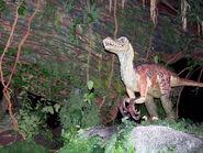 Animal Kingdom velociraptor