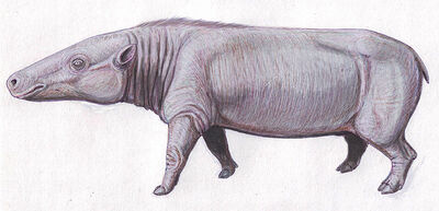 Anthracotherium.jpg