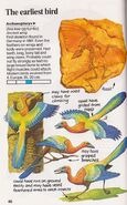 Archaeopteryx Spotter's Guide to Dinosaurs