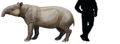 Megatapirus.jpg