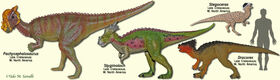 PachycephalosaurModels.jpg