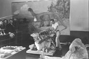 Camarasaurus in the Smithsonian Institution 2