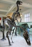 Anatotitan copei