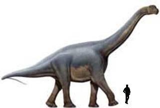 Aragosaurus.jpg