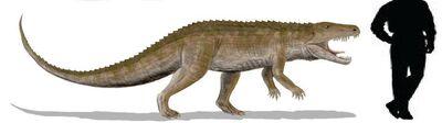 Ornithosuchus.jpg