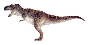 T-rex male.jpg