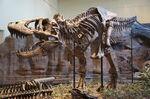 Tyrannosaurus dinosaur.wiki CM 9380.jpg