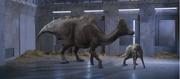 Hypacrosaurus 4.png