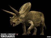 Torosaurus z1.jpg