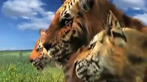 剑齿王朝Saber-toothed dynasty Amphimachairodus palanderi fighting with Dinocrocuta gigantea