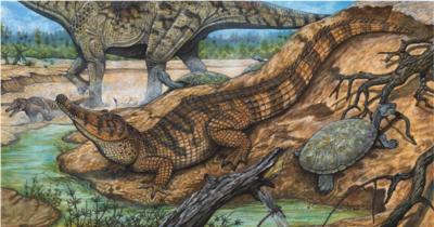 Figura-3-Reconstrucao-artistica-de-Pepesuchus-deiseae-crocodiliforme-de-habitos.png