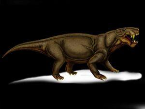 Leontocephalus rubidgei