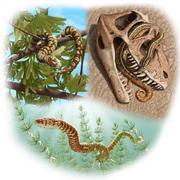 Portugalophis Diablophis Parviraptor illustration.png