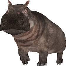 Hippopotamus major
