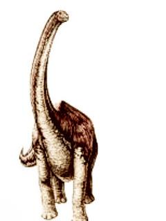 Huabeisaurus