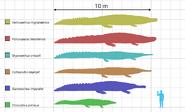 Large crocodyliformes size comparison