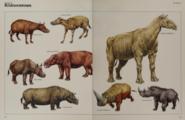 Rhinoceros collection