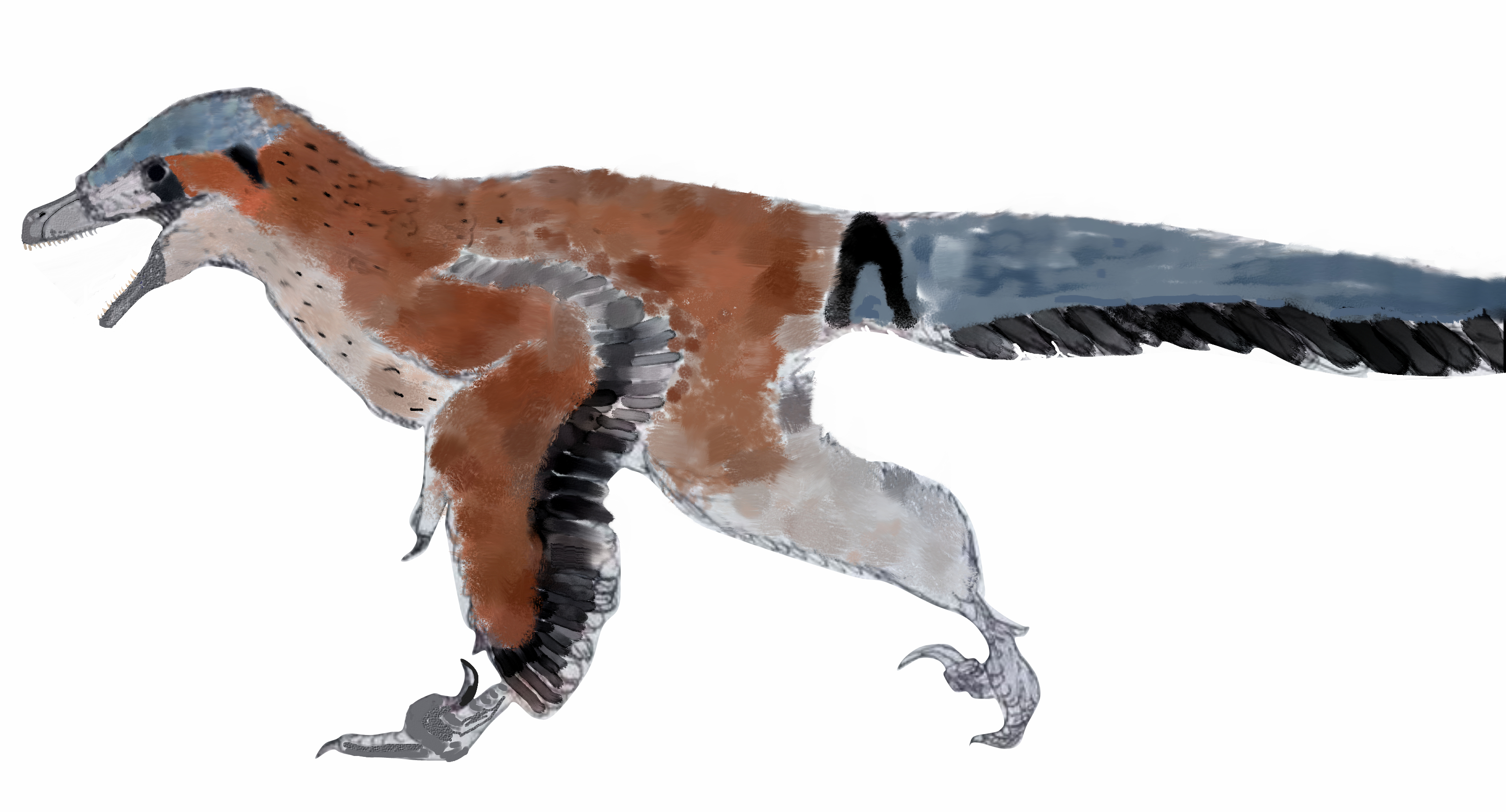 Ornithodesmus