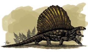 Dimetrodon Grandis.png
