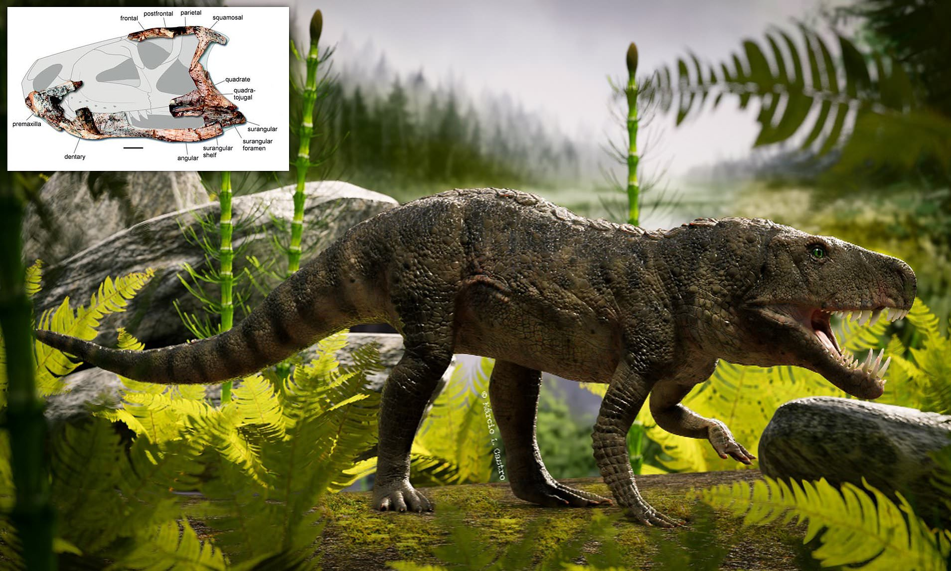 Dynamosuchus