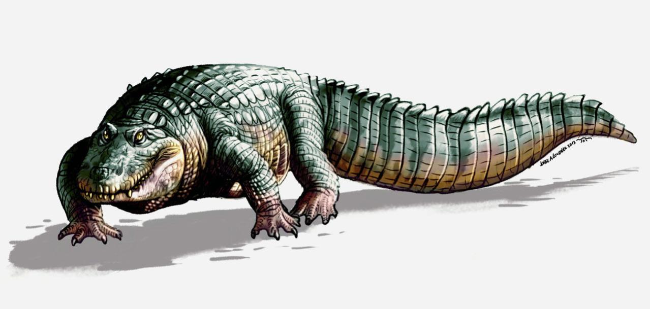 Crocodylus falconensis
