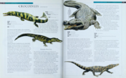Crocodiles 2