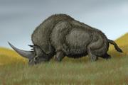Restoration of Elasmotherium sibiricum eating.png