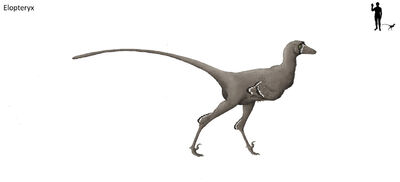 Elopteryx by hyrotrioskjan-d3llwnd.jpg