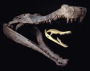 Sarcosuchus-0